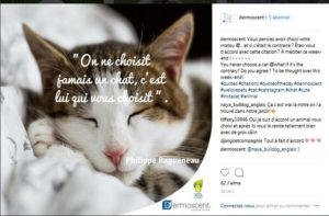 Journée mondiale du chat Dermoscent