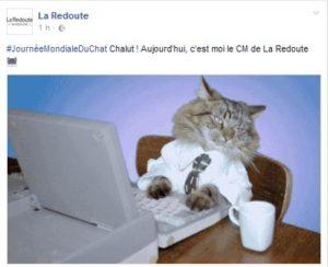 Journée mondiale du chat La Redoute