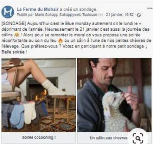 blue monday _ferme du mohair