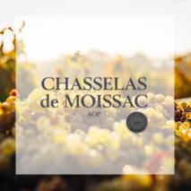 Chasselas de Moissac
