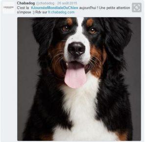 Chabadog pour la journée du chien