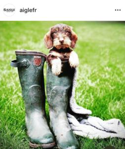 L'Aigle - photo instagram