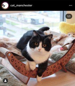 INSTAGRAM le compte du chat cat_manchester - So Happy Web